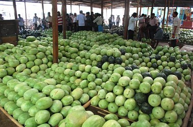 Fruit seller sorting watermelons at Maharajgang Bazaar Agartala. TIWN Pic April 19