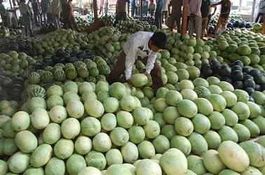 Fruit seller sorting summer fruits at Maharajgang Bazar, Agartala. TIWN Pic April 20