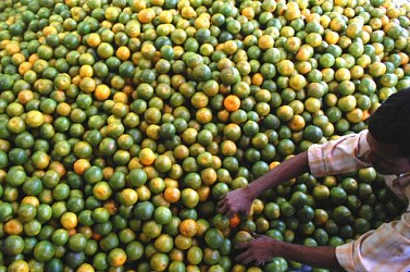 Oranges from Jamphui hill arrive in  Agartala MG Bazar. TIWN Pic Oct 29