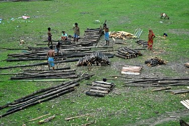 People collecting firewood at Teliamura. TIWN Pic Aug 28
