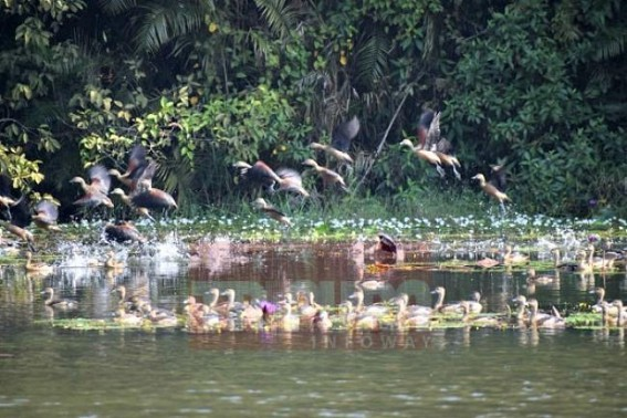 Migratory birds start arrival to enliven Tripura in winter