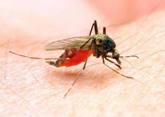 Workshop conducted to prevent Malaria