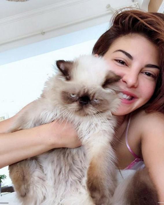 Jacqueline Fernandez posts selfie with pet cat