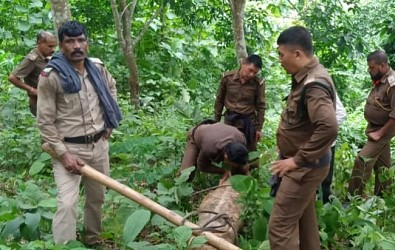 Bishalgarh Police, Forest Dept seized illegally collected wood and tree logs. TIWN Pic July 7
